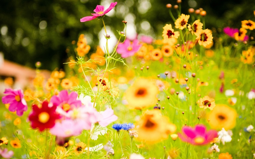 colorful_flowers-wide