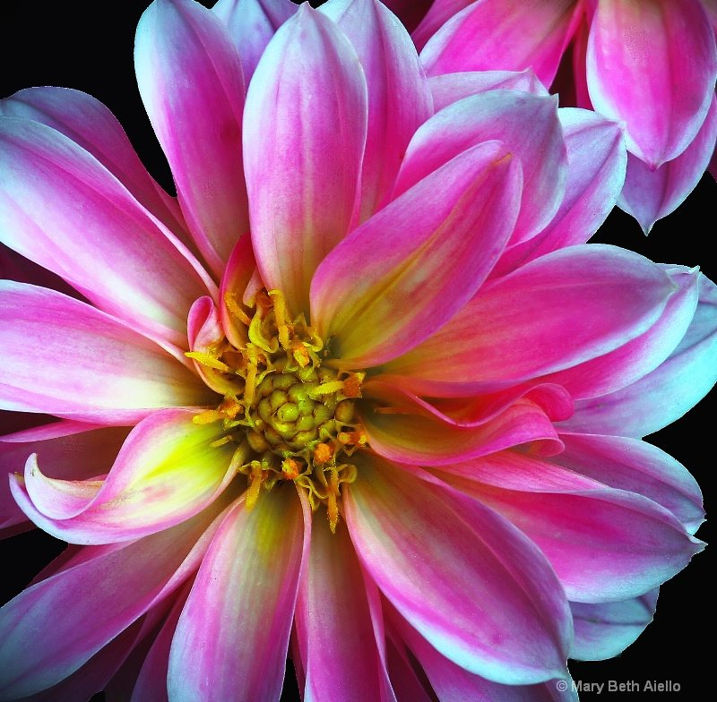 Flowers Closeups(feel the beauty), Amazing pictures super ... Real Alien Footage 2013