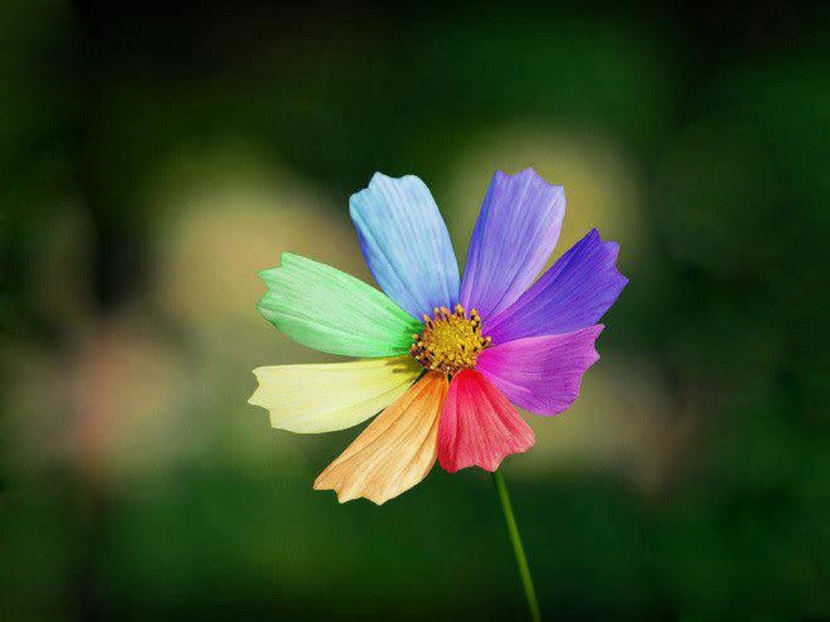 flowers_colorful_flower-01