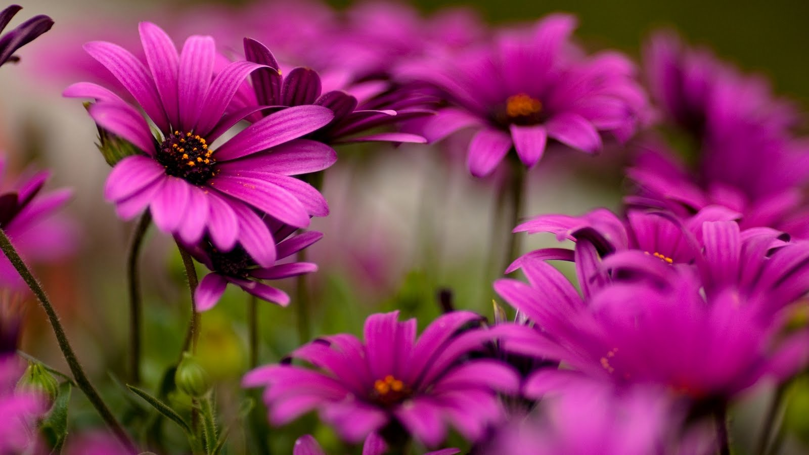 Hd Pictures Of Flowers HD Flowers hot