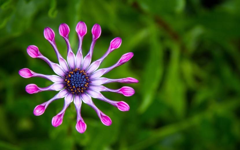 very rare flower